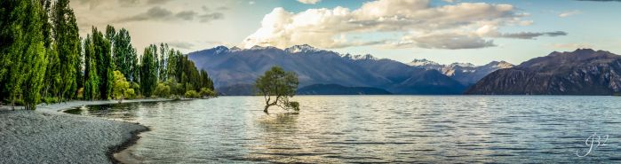 Tree in Water - Lake Wanaka New Zealand by es32