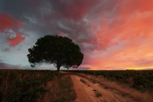 Road to the forgotten tree by prperold