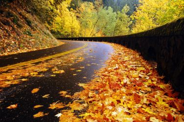 Historic Highway Autumn Study by greglief