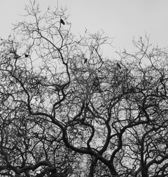 Tree with crows 2 by BlackFluffyRainbows
