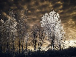 Light of the Setting Sun - 3 of 8 by KBeezie