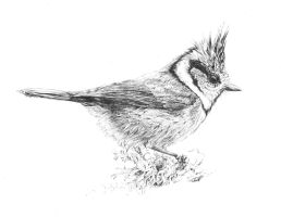 Crested Tit by Char10tte