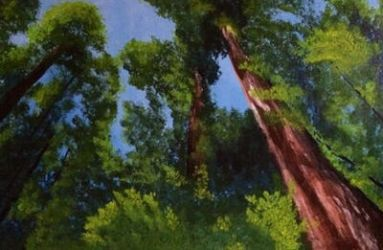 The Redwoods by SmashArtistry
