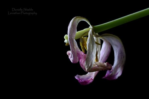 Gothic Curls by DamiasPhotos