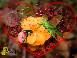 My heart is yours, Lady Bug! by Pissenlit00