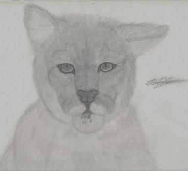 Cougar by evilmonk1993