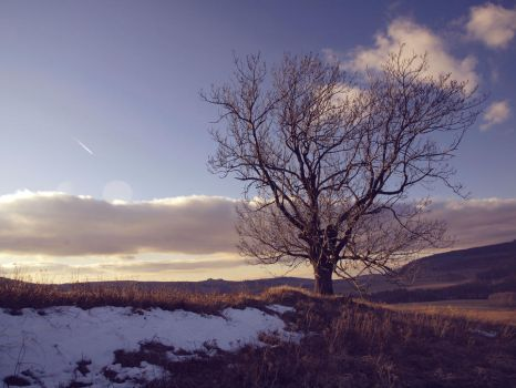 Alone tree 2 by FrantisekSpurny