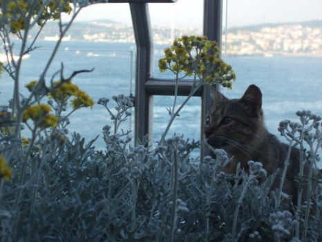 A Cat In Istanbul by karbonhidrat