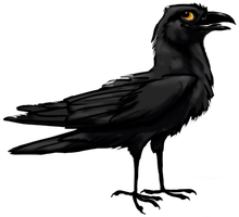 Crololololow Crow for Avani by Kerrzai