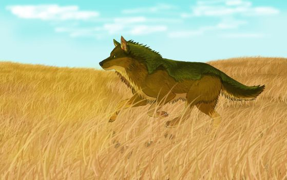 Wolf and field by KailerHix01