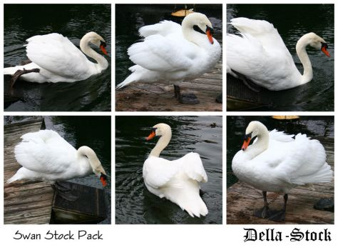 Swan Stock Pack by Della-Stock