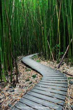 The Bamboo Forest by La-Vita-a-Bella