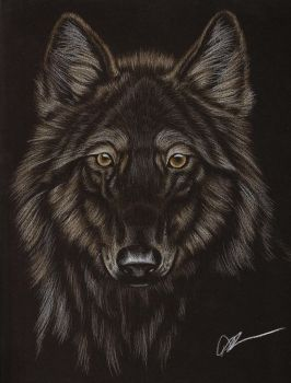 Black Wolf by Canuckdesz