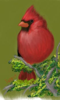 Resting Cardinal by ArtworkbyDanielWard