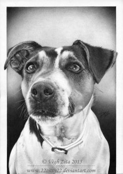 Dog pen drawing by 22Zitty22