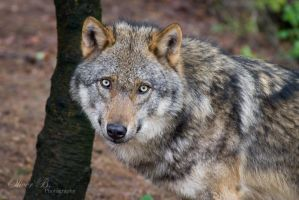 The Eyes of the Hunter by OliverBPhotography