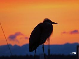 Tangerine Heron Sunset by wolfwings1
