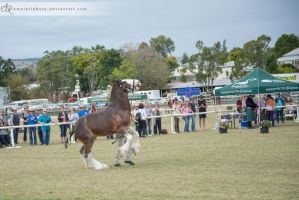 SRCS Clydesdale #130 by AmoretteRose