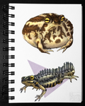 Frog and Newt - Colored version [Sketchbook] by pouchdweller