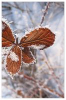 Winter Leaves: The Butterfly by defania