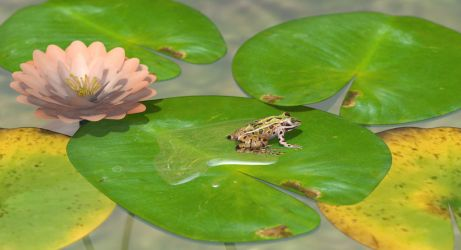 Southern Leopard Frog by KenGilliland