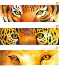 Eyes of the tiger by the-evil-legacy