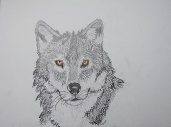 Wolf by Black-Rose-92
