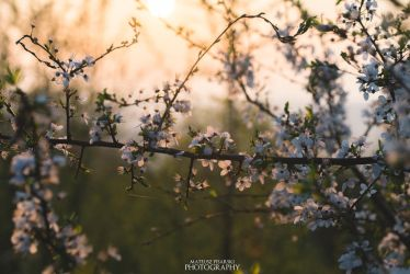 spring love by MateuszPisarski
