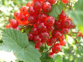 currant and summer by andi40