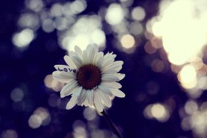 Love With A Side Of Bokeh by pinkparis1233