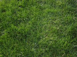 Grass by ashzstock