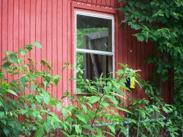 Out The Barn Window 2 by meljoy68