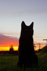 Leo in a sunrise by mprangenberg