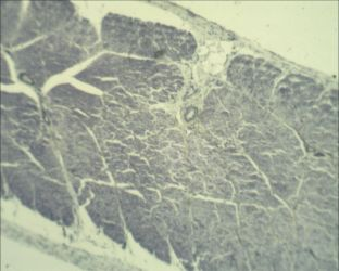 Microscope: Straited Muscle Longitudinal Section by Soldeen111