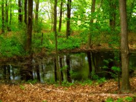 Pond Deep Within Forest by SEnigmaticX