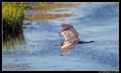 Glide Past II by andy-j-s