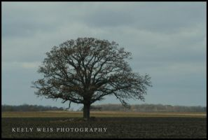 Jerry Bruckheimer's Tree by KeelyWeisPhotography
