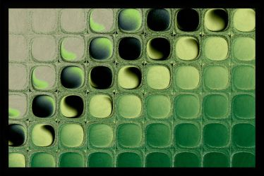 Microarray by AntiCollegiality