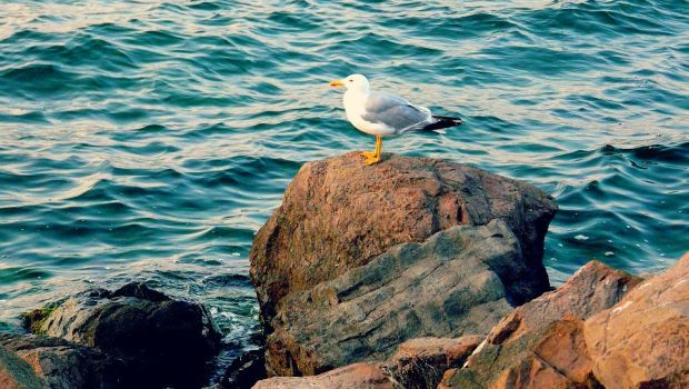 seagull by psychogirl33