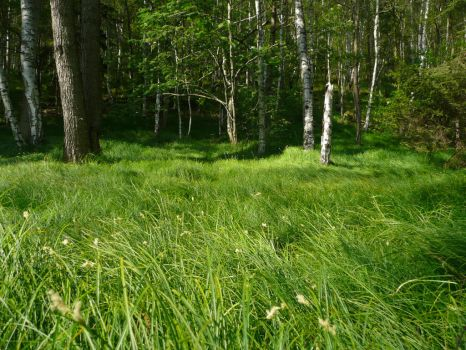 Grass in Forest by PanMari