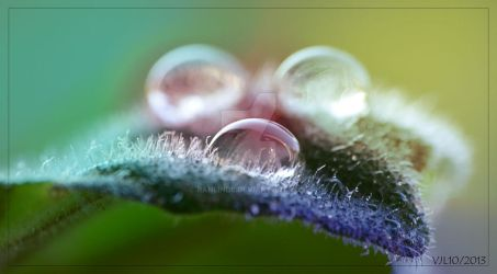 Hairy drops by Ranlinde