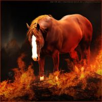 HEE Horse Avatar - Argnis by Art-Equine