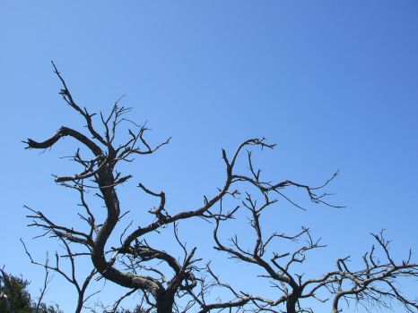 Dead Tree Stock 2. by Jiko-Stock