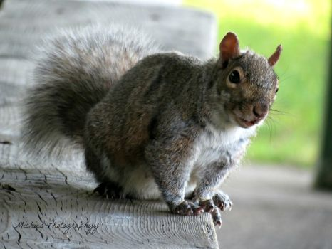 Squirrel Portrait by Michies-Photographyy