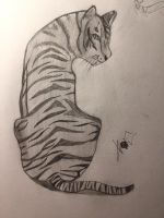 Beautiful of the Tiger  by knockoutandsonic