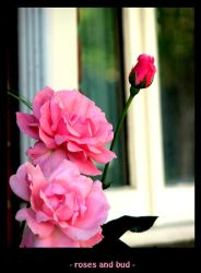 Roses and Bud by warda458