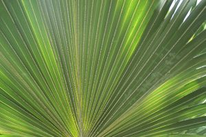 Frond by michaeleen