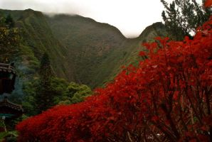 red bushes and green mountains by pramash