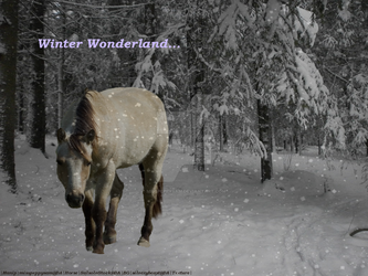 Winter Wonderland {Manip} by misspeppysam