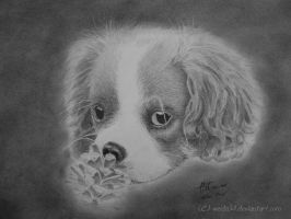 Little Cavalier by weida34